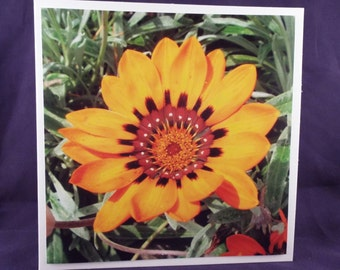 Sunshine (Square Floral Blank General Use Card)