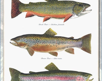 The WILD Poster, a 3 trout poster by Flick Ford with a Brook Trout, a Brown Trout and a Rainbow Trout.