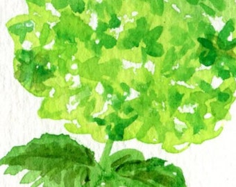 ACEO Lime Green Hydrangea Origina watercolor Painting, hydrangea decor, Small flower Art Card
