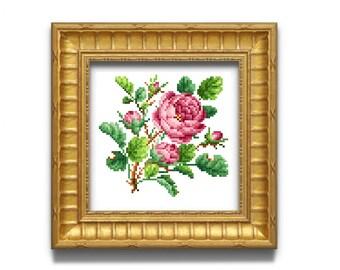 Old rose. Cross stitch pattern. Instant download PDF.