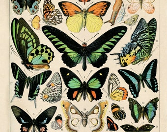 Butterfly Diagram 1 Poster Vintage Reproduction. French Butterflies Chart. Le Petit Larousse Illustré Papillons by Millot. Insects  CP209