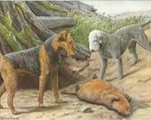Airedale and Bedlington Terriers 1910s Louis Agassiz Fuertes Antique Dog Art Print