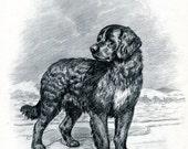 Newfoundland Vintage Dog Illustration Edwin Megargee 1950s Dog Art Black and White