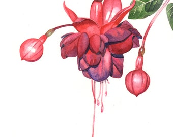 Fuchsia Watercolor painting PRINT of watercolor painting F0615 A4 print