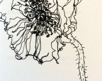 Black and White Open Poppy Flower Drawing - SFA -  ACEO - Fine Art Miniature- Poppy Flower Study - Wedding Thankyou Gift