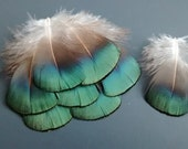 Golden Pheasant feathers, Earring, Jewelry, Craft