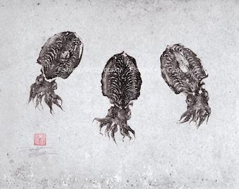 BABY CUTTLEFISH swarm (kouika-no ko) GYOTAKU print - traditional Japanese fish art - by dwight hwang