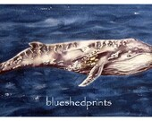 Large Whale Print, ocean wall art, nautical painting, watercolour, nursery animal prints, sealife print