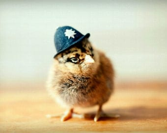 Photo Print 8x10 Chicken In A British Bobby Hat Chicks in Hats Baby Animal Photograph