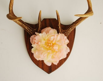 Vintage Deer Antler Mount with Flower - Floral Pink Peach Wall Hanging Taxidermy 6 Point Rack Home Decor Decoration