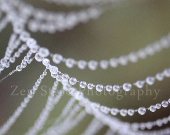 Dew on a Spider Web Photo. Nature Print. Dew Photography Print. Water Droplet Wall Art. Unframed Print, Framed Photo, Canvas Print.