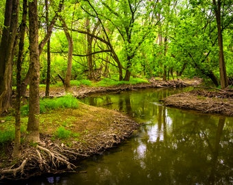 Stream at Wildwood Park in Harrisburg, Pennsylvania - Landscape Photography Fine Art Print or Wrapped Canvas