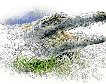 Nile Crocodile watercolour - wildlife art - nature print of original artwork