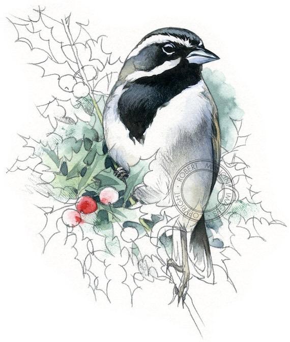 Black-throated Sparrow - bird art, wildlife art - nature print of original artwork