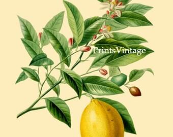 Lemon - Printable Image Instant Download