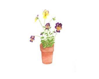Pansies Watercolor / Original Painting / Botanical Illustration / Fine Art / Clay Pot Floral Violas / Realistic / Contemporary / 9x12