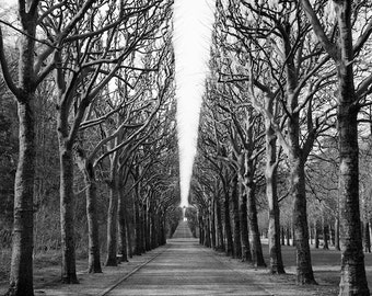 black and white photography, trees, tree allée, nature, landscape, Paris photography, French wall art, decor, home decor, fine art print