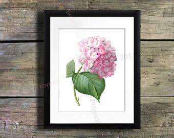 Pink Hydrangea art Print #2, vintage flower art, Cottage wall art,  French wall art, antique wall art Flower decor Flower print Garden print