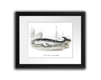 Whaling History Whale poster print #15 Man Cave Decor Print Nautical Decor Marine Mammal wall art  8x10 Print Gnosis Sea Life Art.