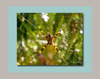 Hawaiian garden spider. Nature photography. Hawaii canvas print. Man room idea. Digitally signed. Spider canvas. Man cave. Ready to hang.