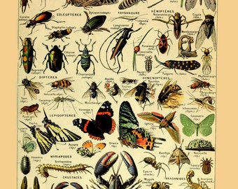 vintage french illustration learning board arthropodes insects arachnids crustaceans DIGITAL DOWNLOAD
