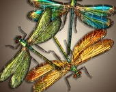 DRAGONFLIES 7x10 inch Digital Printable Collage Sheet JPG-PNG for Paper Crafts Scrapbooking Transfer Art