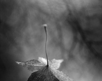 "black and white photography, falling leaf, autumn, fall time, change, monochromatic wall art - 16x24, 11x16 or 8x12 photograph, ""Free Fall"""