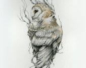 Barn owl -11 x 14 reproduction of original drawing