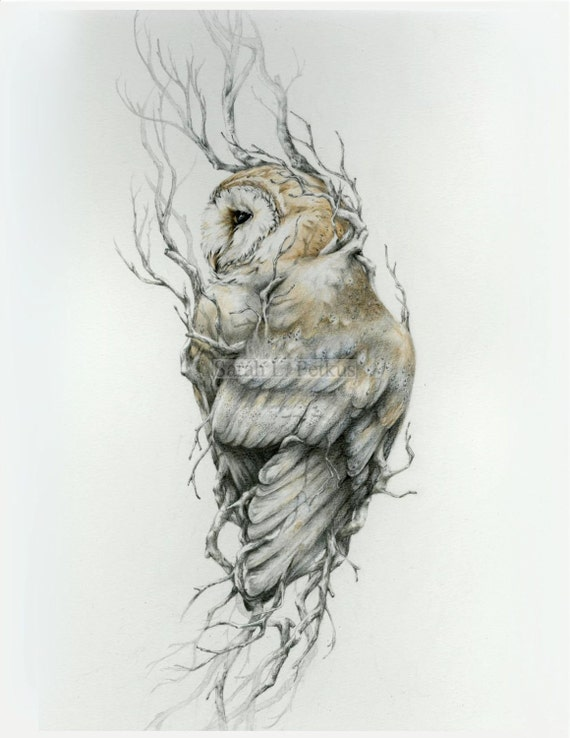Baby Barn Owl Drawings Barn Owl 11 x 14 Reproduction