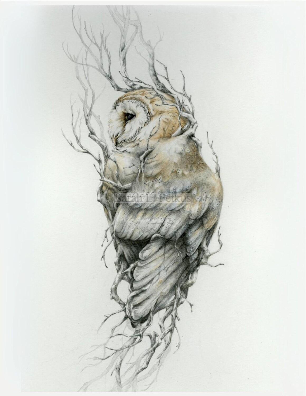 barn owl 13 x 19 fine art print owl art drawing