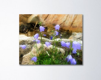 Bluebell Art, Floral Canvas, Nature Wall Decor, Flower Canvas, Fine Art Photography On Canvas, Fine Art Canvas, Purple Flowers, Fogo Island