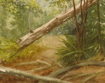 Forest Trail, Original Watercolor, Prints Available, 5x7 print with 8x10 matching mat. 20.00 each, Includes tax,shipping and handling.