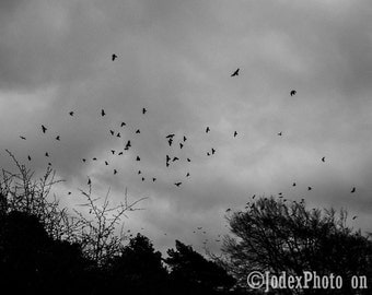Instant Digital Download Fine Art Photograph 'Gothic Birds' Printable