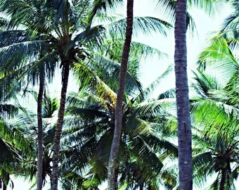 Tree print, Palm Tree print, Palm Tree photo, Green, Wall Art, Nature Print, Nature Decor, Tree Photo,Tree Art,Nature Photography,Modern Art
