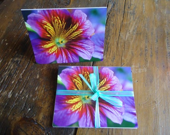 Salpiglossis - Pack of 5 Cards