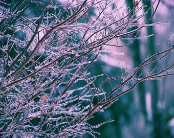 Frozen Tree, Outdoor Photography, Nature Photography, Winter, Winter Photography, Ice Storm