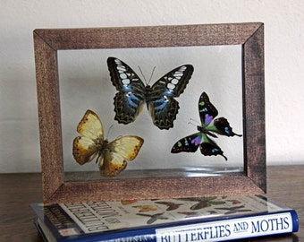 Framed Group of Three Tropical Butterflies