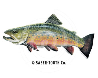 Brook Trout Fish Decal Sticker