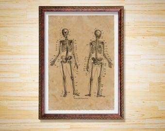 Macabre print Anatomy decor Skeleton poster