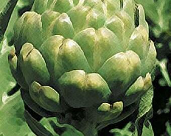200 Green Globe Artichoke Seeds