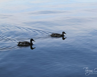 Two Ducks Photography Print