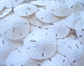 "100 Sand Dollars-1.5-2""- Beach Wedding Favors-Real Sand Dollar-Sand Dollar Bulk-Beach Wedding Decor-Beach Decoration-Sea Shell Bulk-Supplies"