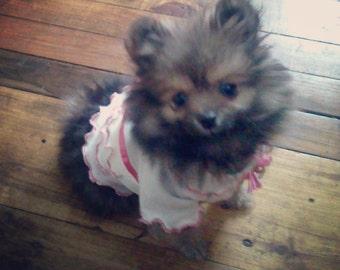 Adorable ruffled turtleneck top/dress for teacup/toy/small breed dogs.You customize by color choices!