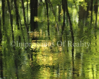 Reflections in Spring Pond