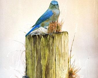 Female Bluebird, Eastern Bluebird, Blue Bird Photography, Fine Art Photography, Bird Wall Art, Wooden Fence Post, Songbird Art Print