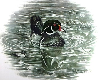 Louisiana Wood Duck