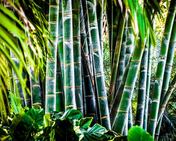 green bamboo stalks large wall art asian decor spa art
