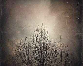 Tree, Howling