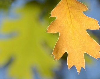 Note Card Yellow Oak Leaf 3.5 by 5 card autumn greeting card Free Shipping