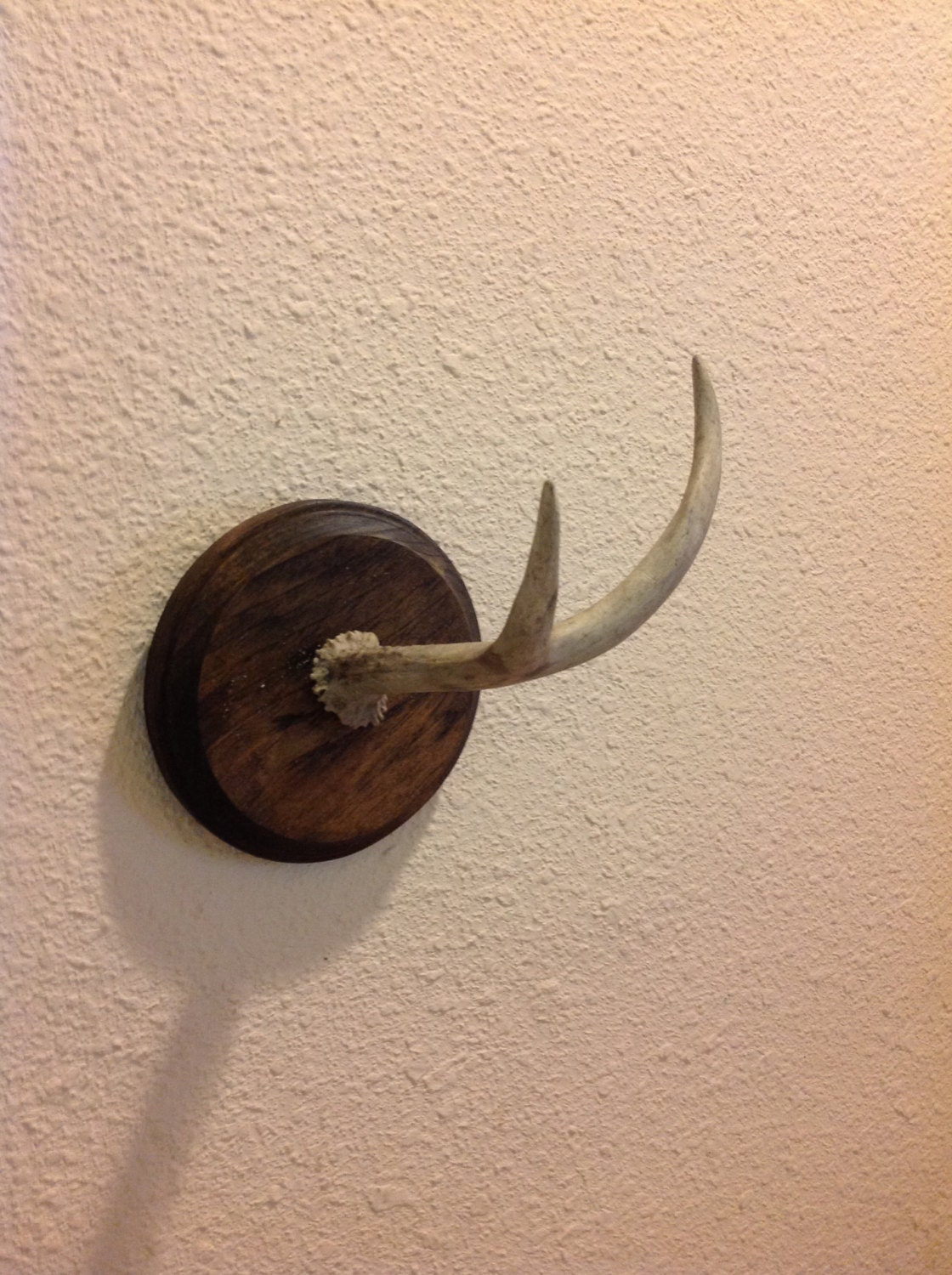 Deer antler jewelry holder key rack by cadaverousanimation on etsy - Antler key rack ...